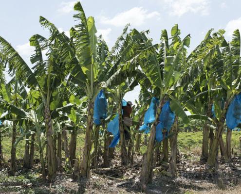 Surinaams staatsbedrijf claimt